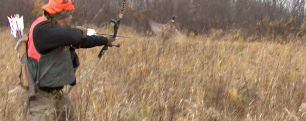 Hunting pheasant with a bow